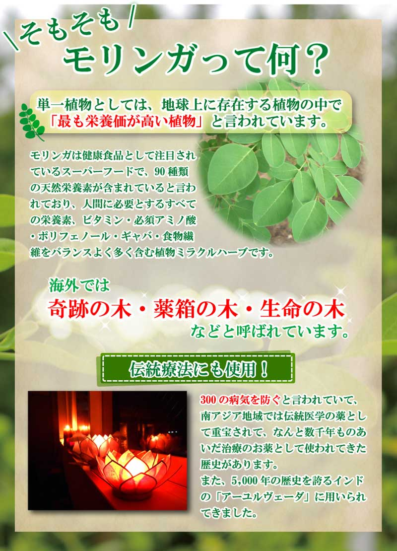 モリンガは単一植物として最も栄養価が高い植物